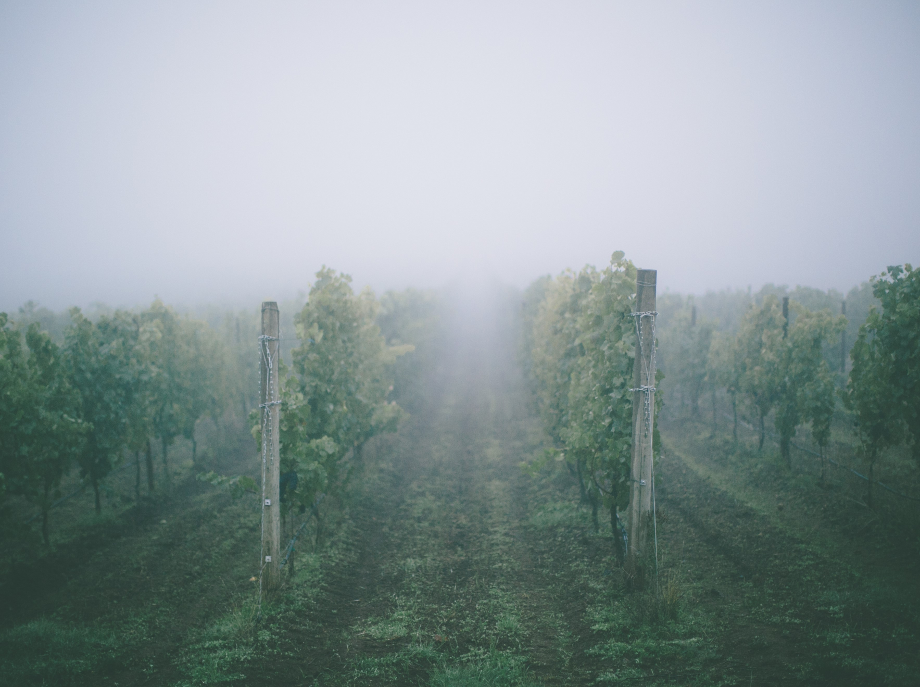 AngelNews wine column: Modern Times – The Fog and the Heat