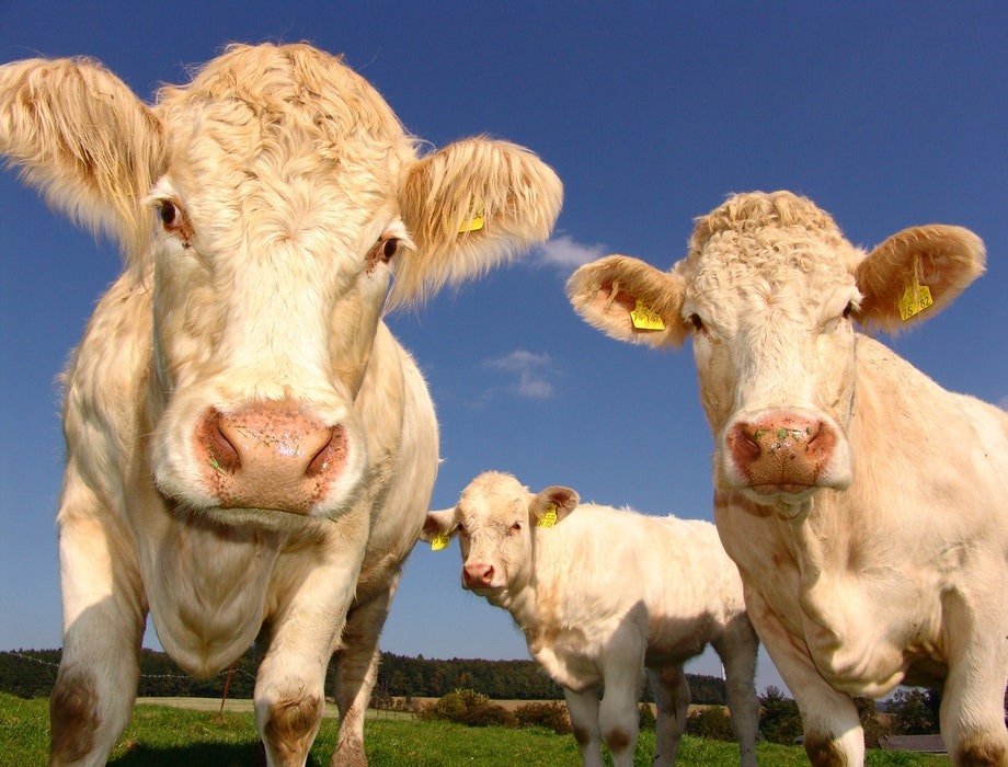 UK test for bovine TB to help US farmers